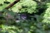 yatsu-vol13-41